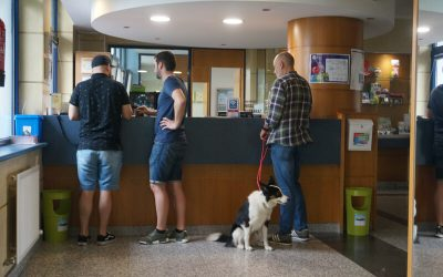 Bilbao Hostel es Dog Friendly
