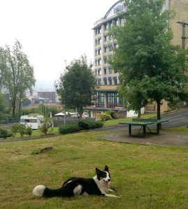 Dog friendly Bilbao hostel