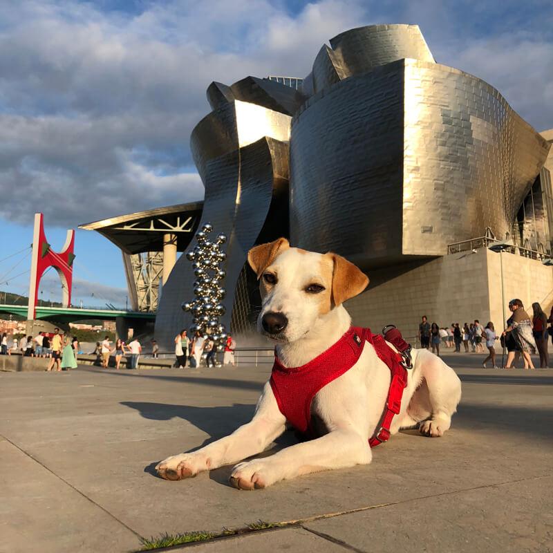 Bilbao Hostel premia con una estancia de fin de semana en Bilbao a 4 personas que viajen con su mascota